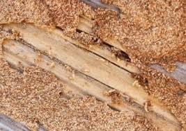 شركة مكافحة النمل الابيض و الصراصير بالطائف