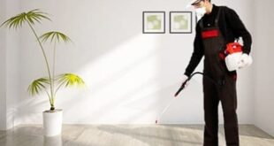 شركة ورس لمكافحة الحشرات بالاحساء