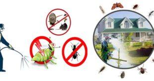 شركة ماسة لمكافحة الحشرات