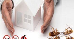 شركة ميس لمكافحة الحشرات